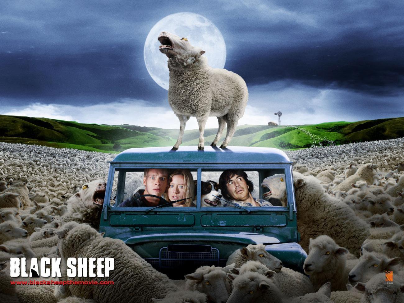black-sheep_00