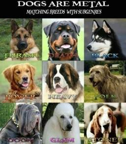 power-metal-meme_metal-dogs_o_3769451